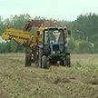 Новые формы работы с неплатёжеспособными сельхозпредприятиями внедрят в Беларуси