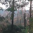 Гроза повалила 90 гектаров леса в Гомельском районе (ВИДЕО)
