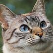 Кот вместе с хозяином смотрел видео. Но оно пушистому не понравилось – только посмотрите на его реакцию! 100% будете хохотать! (ВИДЕО)