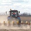 Сев кукурузы завершается в Беларуси