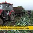 Запасы на зиму: стабилизационные фонды продовольствия созданы в регионах Беларуси