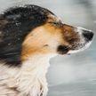 Белгидромет: на территории Беларуси ожидается усиление порывов ветра