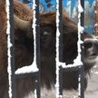 В Минском зоопарке – новый обитатель