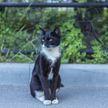 Кошка и котенок через окно видят кота, который приходит их навещать уже 2 года. Посмотрите на эту разлученную семью – удивительно! (ВИДЕО)