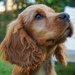 Ветеринары воскресили умершую собаку