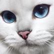 «Он просто прекрасен!»: гуляющий по снегу белоснежный кот стал звездой Instagram (ВИДЕО)