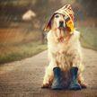 Видео с реакцией пса на прогулку в дождь стало вирусным. Взгляните