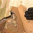Многодетная семья попала в сложную ситуацию из-за крыс и жилищного коллапса