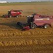 В Беларуси началась массовая уборочная. Намолотили уже полмиллиона тонн зерна