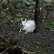 Редкая белка белого окраса попала на фото в Шотландии