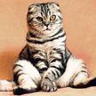 Хозяйка решила выяснить, кто из котов распотрошил сумку, и поместила в нее скрытую камеру (ВИДЕО)