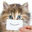 Котенок покорил всех необычным выражением «лица». Интересно, такая мордашка останется у него и во взрослом возрасте? (ВИДЕО)