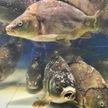 Парень сделал предложение девушке и искупался в аквариуме гомельского магазина