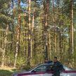 Обычный поход в лес теперь может закончиться штрафом