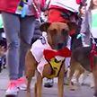 Необычный новогодний марафон проходит в Мадриде: участники – домашние питомцы