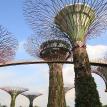 В Сингапуре открываются парикмахерские и прачечные
