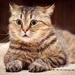 «Это очень смешно!»: реакция котенка на храп хозяина развеселила сеть