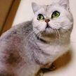 Кошка в Ухане 40 дней жила в пустой квартире: родила котят и съела всех рыбок в аквариуме