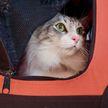 Пассажир с большим котом лишился бонусных миль