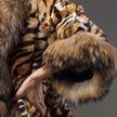 В Калифорнии запретят продажу меха и использование животных в цирках