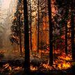 Минлесхоз расширил перечень регионов, где вводится запрет на посещение лесов