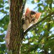 Котенок отчаянно пытается забрать еду у взрослых котов. Такого вы еще не видели! (ВИДЕО)