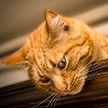 Суровая кошка учит храбрости своего нерешительного котенка