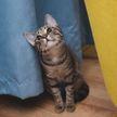 Кот помог собаке украсть лакомство и рассмешил всех (ВИДЕО)