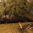 В Бресте сильный ветер валил деревья на автомобили (ВИДЕО и ФОТО)