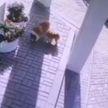 Появилось видео, на котором мужчина крадёт щенка, чтобы подарить его обиженной жене