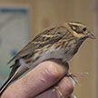 Новый вид птиц нашли в Беларуси