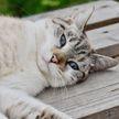 Кот из приюта танцевал и подпрыгивал, чтобы привлечь к себе внимание (ВИДЕО)