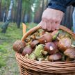 C начала года 37 человек отравились грибами в Беларуси: как обезопасить себя