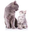 Кот воспитывал младшего брата, но в какой-то момент отвернулся. А зря! Посмотрите, что сделал малыш! (ВИДЕО)