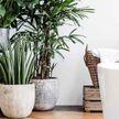 Цветы и растения, которые помогают сладко спать