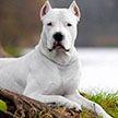 Самые опасные породы собак! Не заводите их ни в коем случае!