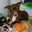 Минчанин похитил собаку после отказа хозяйки продать питомца