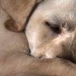 Собака, которая боится ветеринаров, отказалась идти к врачу и рассмешила Сеть. Только посмотрите, как она упирается!
