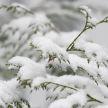 До -9°C: прогноз погоды на 2 декабря