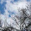 Погода в Бресте. Прогноз на неделю с 20 по 26 января