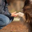 Попытки собаки утешить и развлечь хозяйку умилили всех (ВИДЕО)