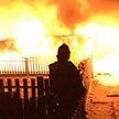 Пожар в приюте для животных в Москве: около 40 питомцев погибли