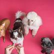 ТОП-5 самых милых пород собак, которые подойдут для аллергиков