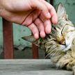 Почему мы становимся счастливыми, когда гладим кота?