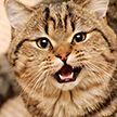 Противник спорта: кот, мешающий хозяйке делать гимнастику, попал на видео