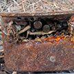 Коробку с 440 патронами нашли в Мостах при расчистке мелиоративного канала