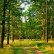 В двух областях Беларуси действуют запреты на посещение лесов