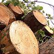 Как зарабатывают деньги на древесине? Путь от заготовки до готовой продукции