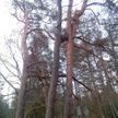 Фотофакт: в Беловежской пуще обнаружили редкое  природное явление