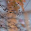 Оранжевый уровень опасности объявлен в Беларуси 21 января. Причина – резкое потепление